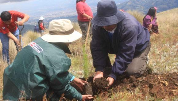En la comunidad de Llacuarimpampa se instaló 2,500 plantones y una vez iniciado el periodo de lluvias se instalarán un total de 25 mil plantones. (Foto: Minagri)