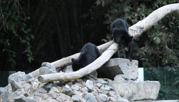 Parque de las leyendas busca ayuda para alimentación de animales. | Foto: Difusión.