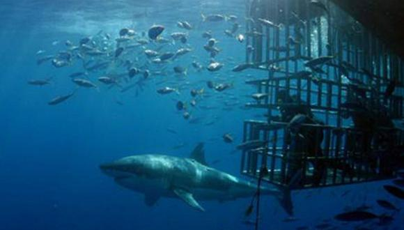 México crea jaula para observar al tiburón blanco con mayor seguridad [VÍDEO]