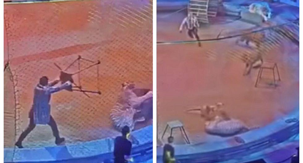 Tigre ataca a león en circo y pelea sorprende al público (VIDEO)