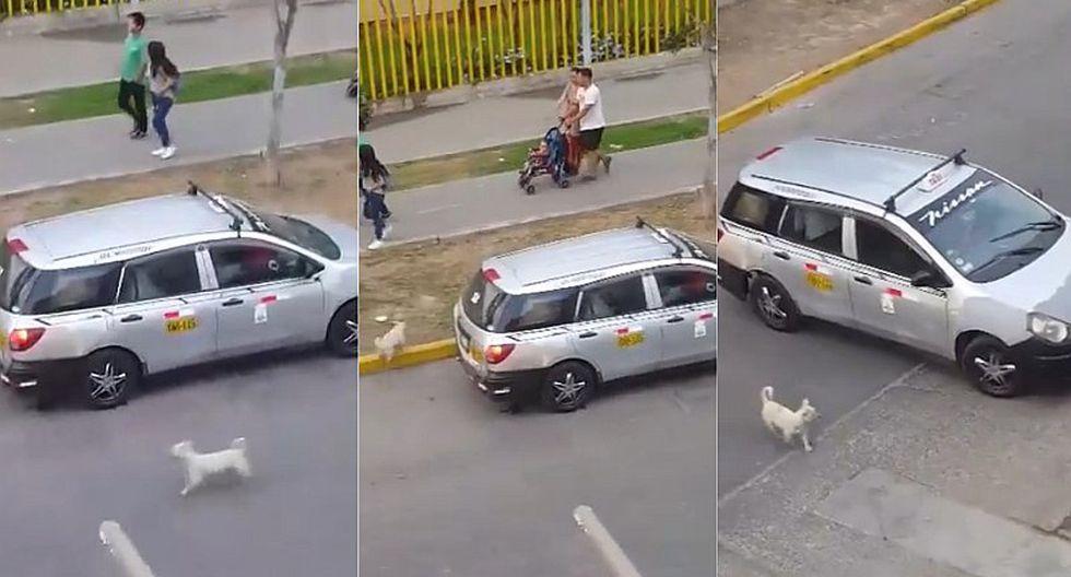 Familia causa indignación por haber abandonado a un perrito en plena vía pública (VIDEO)