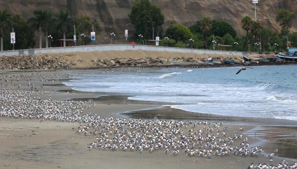 La Marina de Guerra del Perú emitió una alerta para que los ciudadanos se mantengan vigilantes ante cualquier eventualidad. Precisó que se emitirá una alarma en caso se aproxime un tsunami. (Hugo Curotto / GEC)