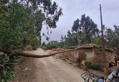 Familia se salva de milagro tras la caída de un árbol sobre una vivienda en Jauja
