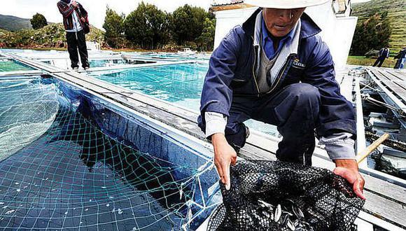 Exportaciones pesqueras para consumo humano ascendieron a $ 908 millones