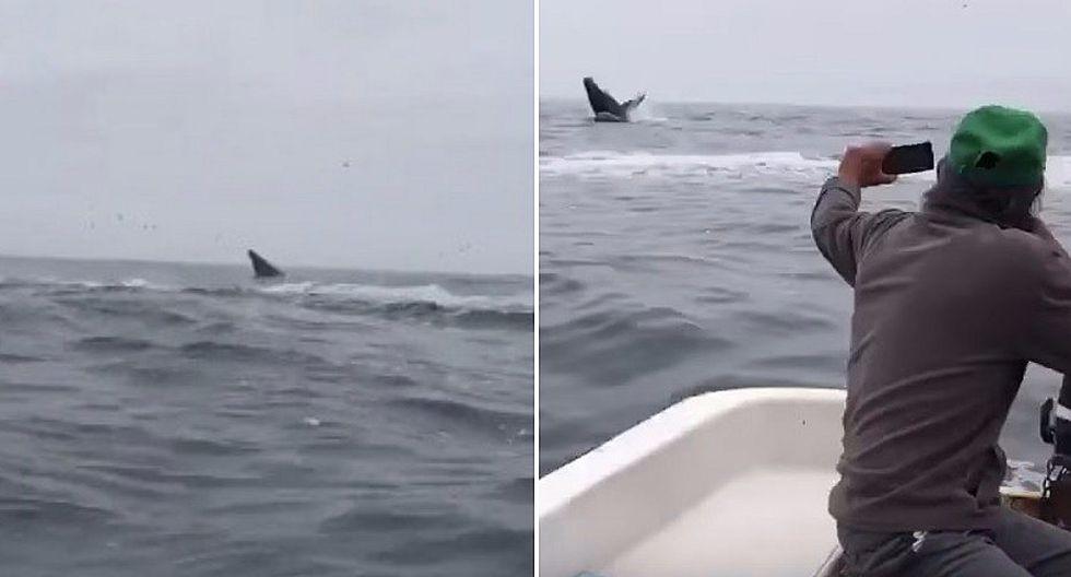 Grupo de ballenas sorprende a pescadores frente a Pucusana (VIDEO)