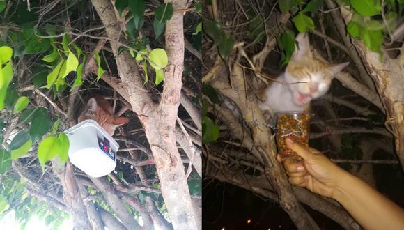 El Proyecto Animalista Colmillo Blanco, es una asociación sin fines de lucro que apoya donando alimentos y mucho amor a estos mininos. Ellos, nos cuentan que Cotty jampas baja del árbol y que solo es alimentada dejándole comida en un taper amarrado en las ramas.