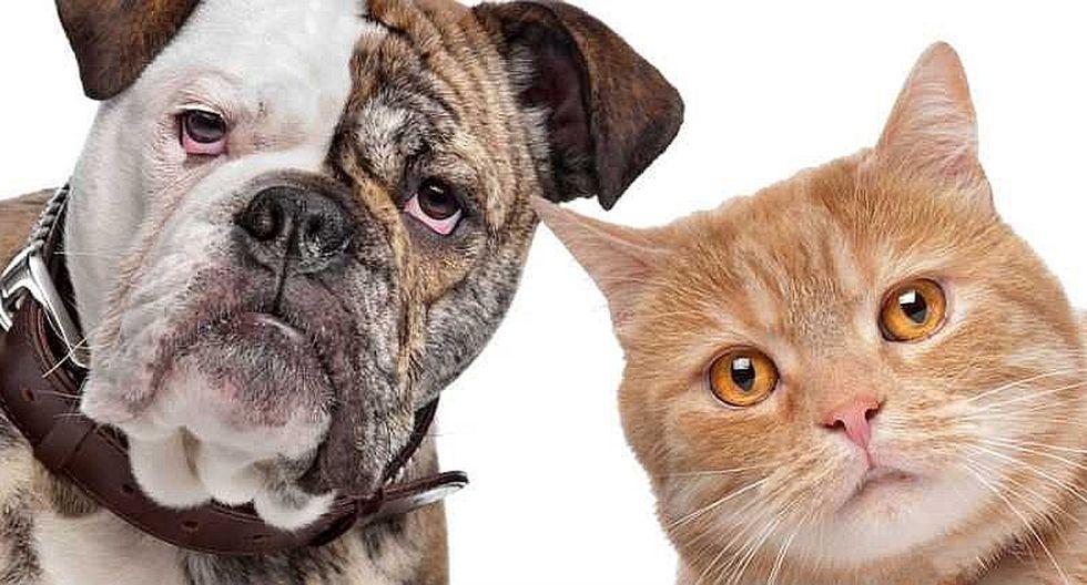 """""""Patatón 2018"""": la primera Teletón para mascotas en el Perú"""