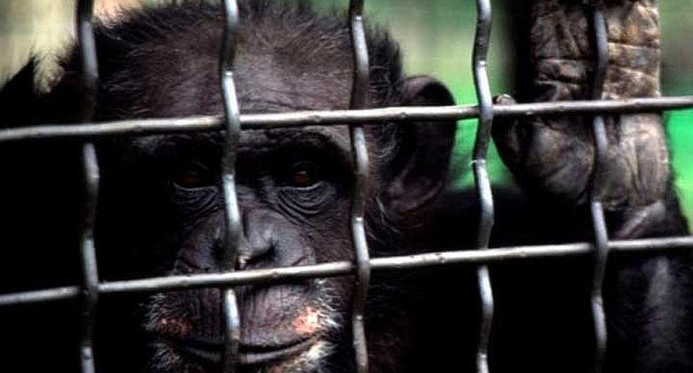 Autoridades se llevaron una sorpresa tras atender denuncia por maltrato animal en circo