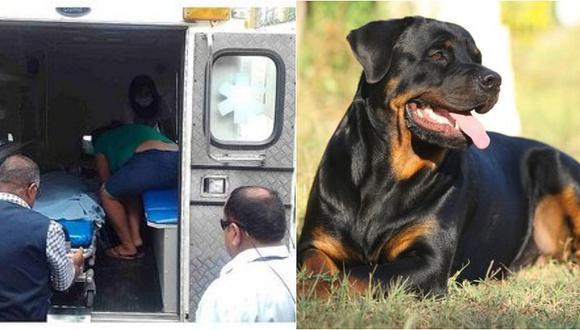 Niña de cuatro años en grave estado tras salvaje ataque de rottweiler