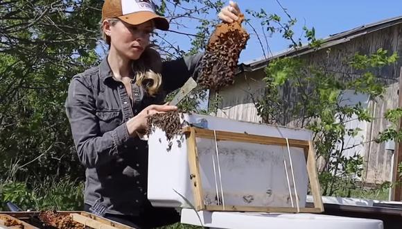 Esta mujer salva a unas abejas que se habían apoderado de una lavadora (Foto: Instagram)