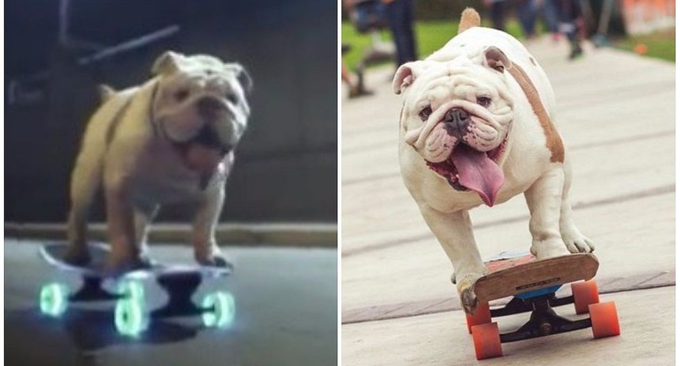 Facebook: Otto, el bulldog skater peruano, protagoniza campaña internacional (VIDEO)