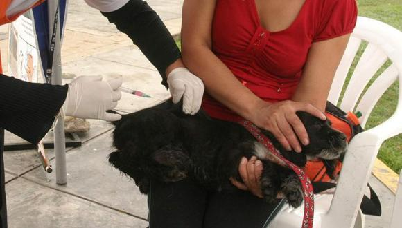 Lanzan campaña gratuita de vacunación antirrábica canina