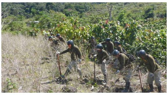 Erradican 19.193 hectáreas de cultivos ilegales de hoja de coca en Perú