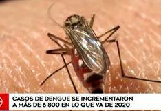 """Nueva cepa del dengue vino de Asia o África: """"Sería el primero que se ha introducido en las Américas"""""""