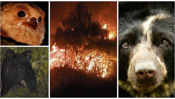 Parque Nacional de Cutervo es arrasado por incendio forestal
