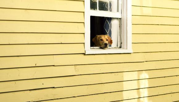 El 84% de los consultados que alquila un hogar vive con su mascota. (Foto: Pixabay)