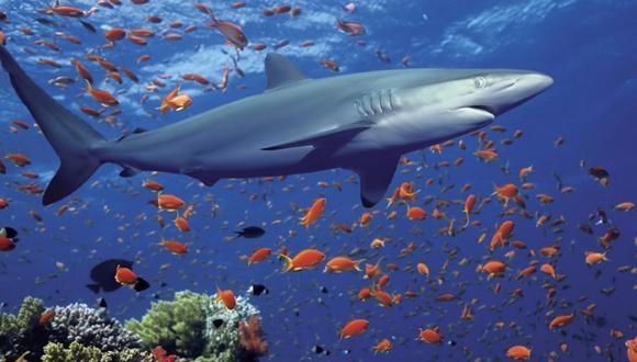 Crearán santuario marino donde prohibirán la pesca y minería