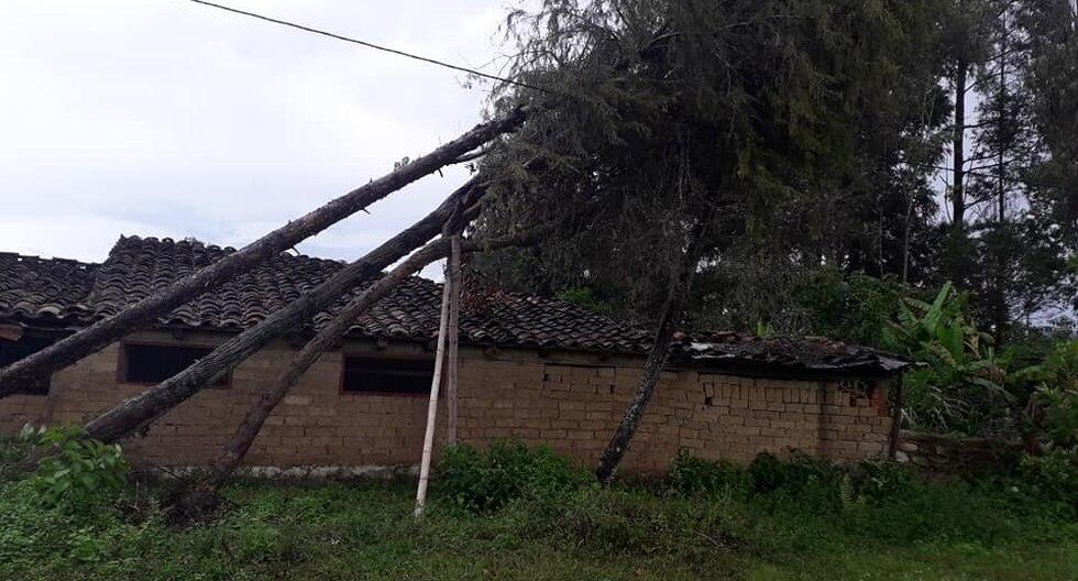 En el distrito de Huambo los vientos huracanados derribaron árboles.  (Foto: Diario El Clarín)