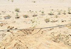 Proyecto Hilando Verde sembrará 120 árboles en Socabaya