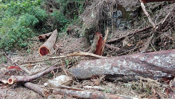 30 hectáreas de bosque se pierden en una hora en el Vraem