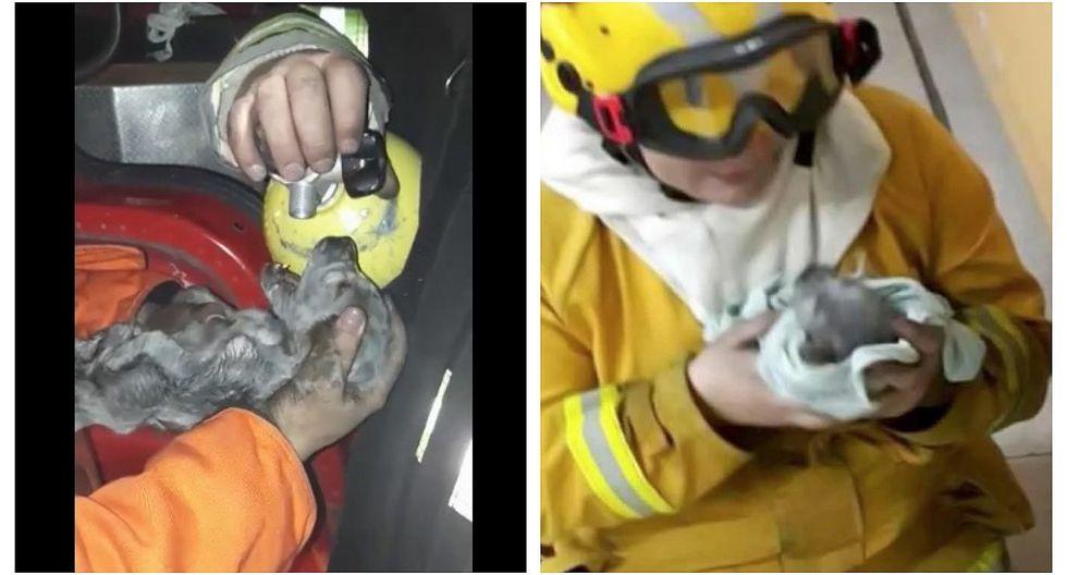 Bomberos salvaron a siete cachorritos de un incendio (VIDEO)