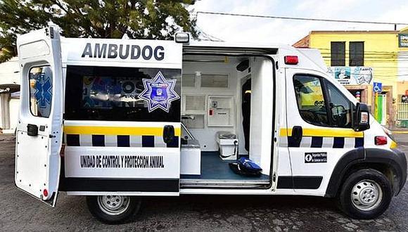 Empezó a funcionar el 'Ambudog', la primera ambulancia para perritos callejeros