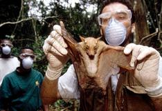 Investigadores chinos encuentran nuevos genomas de coronavirus en murciélagos