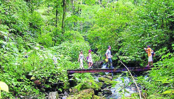 Parque Nacional deTingo María,  tiene 295 especies de aves