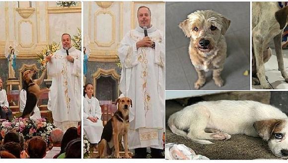 Sacerdote rescata a perritos callejeros y promueve la adopción en misa (FOTOS)