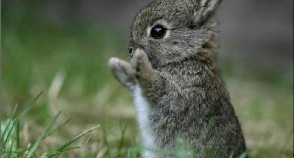 Conejos descubren yacimiento arqueológico en el Reino Unido