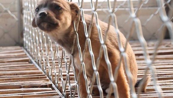 Desde hoy maltratadores de animales irán a prisión, se promulgó Ley de Proteccion Animal
