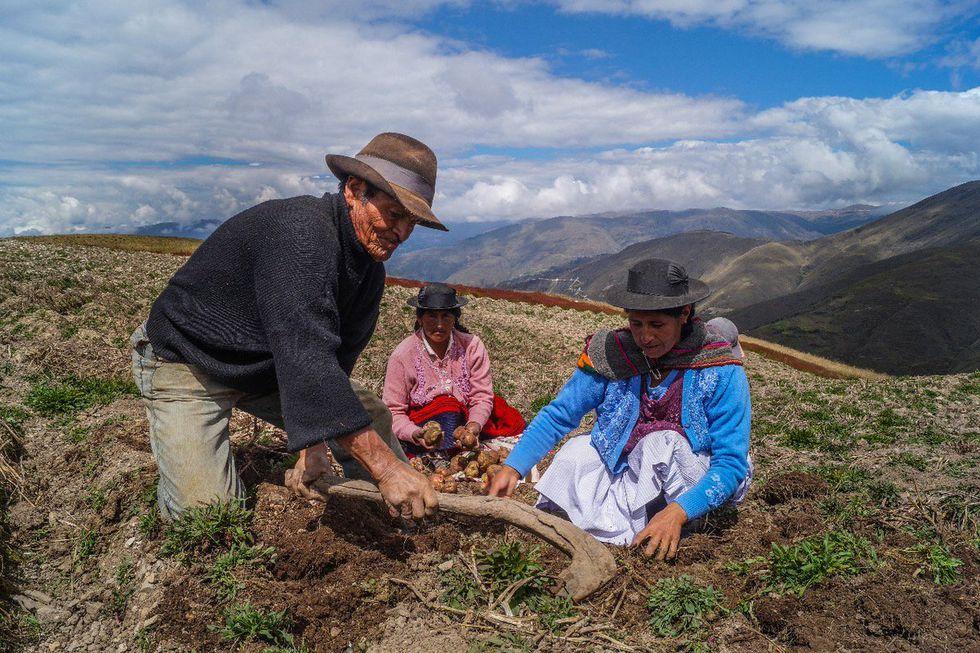Bono Rural 760: Qué requisitos y quiénes serán los beneficiarios de esta subsidio del gobierno peruano