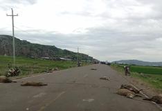 Vehículo atropelló y mató a más de 15 ovejas en la vía Juliaca - Capachica