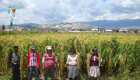 INIA presentan nueva variedad de Kiwicha 'La Frondosa'