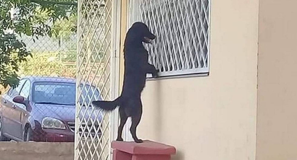 Perrito siguió a su amo hasta la escuela solo para verlo estudiar en su primer día de clases
