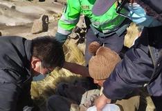 Arequipa: Puma ataca a poblador y queda con varios cortes