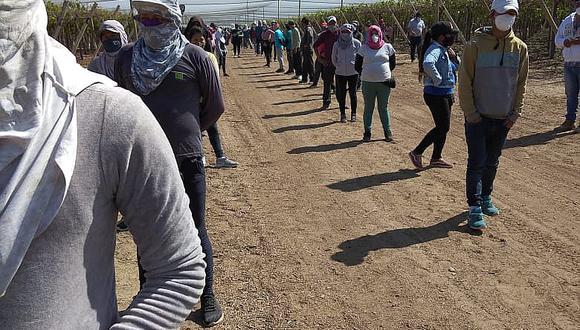 Ica: Sunafil exige a agrícola a incorporar en planilla a 140 trabajadores