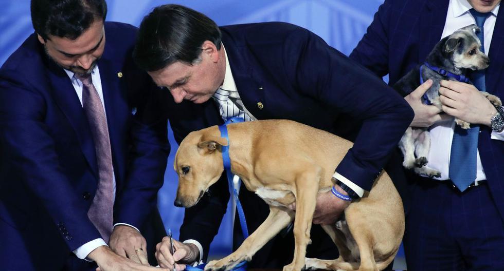 Jair Bolsonaro sanciona ley que endurece penas para el maltrato a perros y gatos