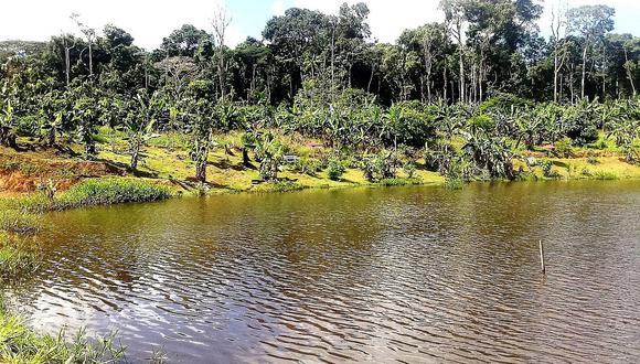 Minam: El Perú promueve la conservación de los bosques