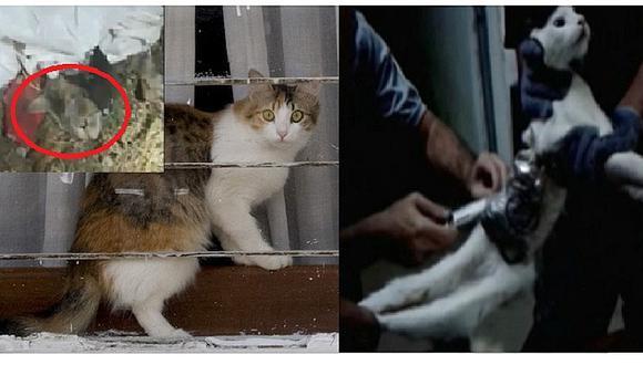 Usan gatos entrenados para ingresar celulares y baterías a cárceles (VIDEO)