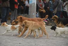 Geresa reporta 18 casos de rabia canina en Arequipa en lo que va del año 2021