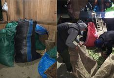 Policía decomisa más de tonelada y media de hojas de coca en Cusco