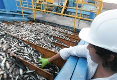 Produce fija límite de pesca de anchoveta para consumo humano en 150,000 toneladas