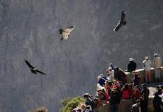 Turismo en Arequipa: Promoción 2x1 para ingresar al Cañón del Colca y otros atractivos emblemáticos