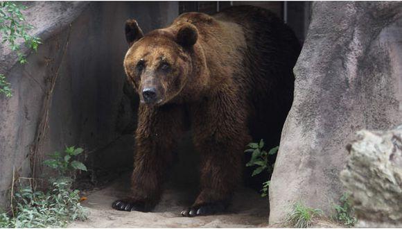 Rusia: Hombre sobrevivió un mes en la cueva de un oso que lo guardaba como alimento