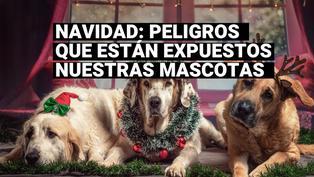 Consejos para que estas fiestas navideñas no sean de terror para tu mascota
