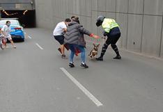 Rescatan a perrita que huyó de su casa tras paralizar el tránsito en Surco