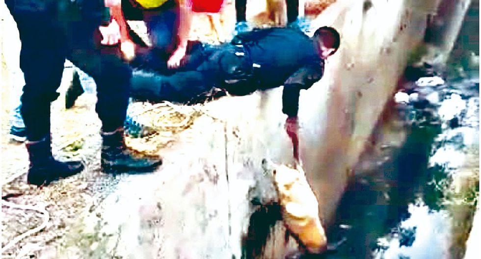 Policías rescatan a un perro que cayó a acequia Cois