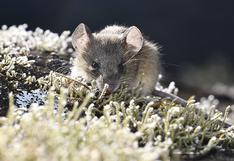 Monitoreo biológico en Choquequirao muestra increíbles criaturas (FOTOS)