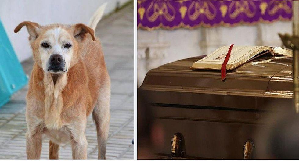 Perrito muere el mismo día del fallecimiento de su dueña (FOTOS)